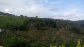 Ландшафт на саде стоковые изображения rf