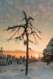 Ландшафт на холме в Rovaniemi - Шотландии стоковое изображение rf