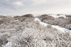 Ландшафт на Hollands Duin в зиме стоковые изображения