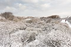 Ландшафт на Hollands Duin в зиме стоковые фотографии rf