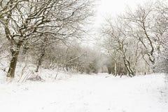 Ландшафт на Hollands Duin в зиме стоковое фото rf