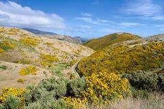ландшафт Новая Зеландия Стоковое Изображение RF