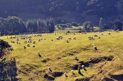 ландшафт Новая Зеландия стоковые изображения rf