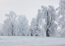 Ландшафт облаков леса зимы - путешествуйте спокойный пейзаж Стоковое Изображение RF