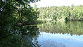 Ландшафт озера летом Сельская местность в Havelland в Германии видеоматериал