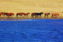 ландшафт озера лошадей Стоковые Изображения RF