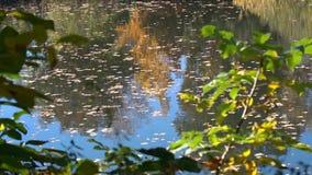 Ландшафт озера осен сток-видео