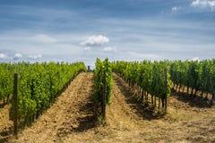 Ландшафт около San Gimignano Тосканы Стоковое Изображение RF