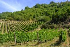Ландшафт около San Gimignano Тосканы Стоковые Изображения RF