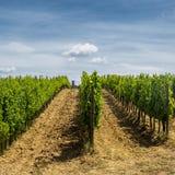 Ландшафт около San Gimignano Тосканы Стоковые Фотографии RF