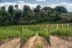 Ландшафт около San Gimignano Тосканы Стоковая Фотография