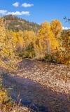 Ландшафт осени вдоль реки Колорадо Delores Стоковое Фото