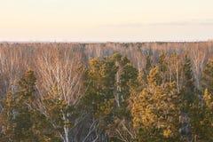Ландшафт осени выходит валы яркое небо Стоковая Фотография RF