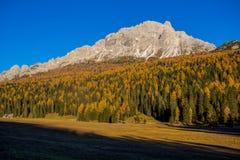 Ландшафт осени в доломитах, Италия, горы, ели и лиственницы который изменяют цвет принимая типичное желтое autum стоковая фотография