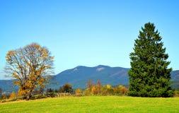 Ландшафт осени в лесе национального парка баварском, Германии стоковая фотография rf