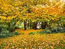 Ландшафт осени в парке. стоковые фотографии rf