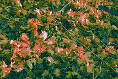 Ландшафт осени в саде в падении Желтые и сухие листья стоковое фото