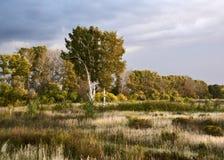 Ландшафт осени в ocher тонах стоковые фотографии rf
