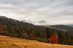 Ландшафт осени горы с цветастой пущей Стоковое Фото