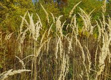 Ландшафт осени Длинняя сухая трава Стоковые Изображения RF