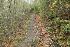 Ландшафт осени естественный udoli prokopske в Праге стоковое изображение rf