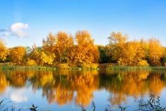 Ландшафт осени, желтые деревья листьев на речном береге на голубом небе и белая предпосылка облаков на солнечный день, отражение  стоковые изображения rf