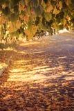 Ландшафт осени живописный с красочными деревьями стоковая фотография