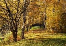 Ландшафт осени, золотое падение стоковые изображения rf