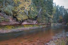 Ландшафт осени и красная каменная скала реки Amata, Латвии, Европы стоковые изображения rf