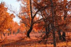 Ландшафт осени леса на солнечный день стоковое изображение