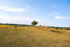 Ландшафт осени на солнечный день вне города Стоковое Изображение
