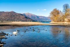 Ландшафт осени озера Maggiore с швейцарскими горами в предпосылке Стоковое фото RF