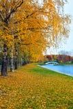 Ландшафт осени парка города с золотыми деревьями и пруда с br Стоковые Фото