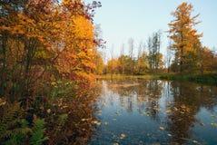 Ландшафт осени - пруд с упаденными сухими листьями на воде Стоковая Фотография RF