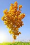 Ландшафт осени с деревом стоковые изображения