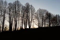 Ландшафт осени с деревьями осени в парке Природа осени - пожелтетый парк осени в погоде осени солнечной Стоковая Фотография