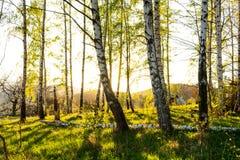 Ландшафт осени с деревьями осени в парке Природа осени - пожелтетый парк осени в погоде осени солнечной Стоковые Изображения RF