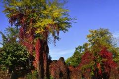 Ландшафт осени с цветами brifght стоковое изображение