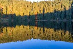 Ландшафт осени - черный лес Стоковое Фото