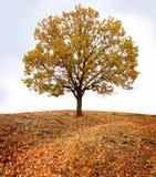 ландшафт осени Стоковая Фотография