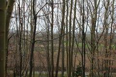 Ландшафт осмотренный через деревья Стоковые Фотографии RF