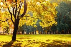 Ландшафт падения красочный в солнечном парке ландшафта падения осветил солнечным светом Парк падения в ярком солнечном свете Стоковое Изображение RF