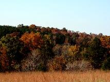 ландшафт падения цветов стоковое изображение