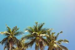 Ландшафт пальмы кокосов тропический Зеленая ладонь на небе бирюзы тонизировала фото Стоковые Фотографии RF