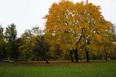 Ландшафт парка города, осень стоковые фотографии rf