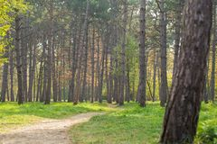 Ландшафт парка города с елями и зеленой лужайкой стоковые изображения