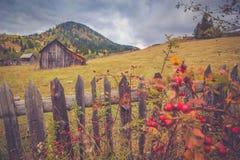Ландшафт пейзажа осени с красочным лесом, деревянными амбарами загородок, плода шиповника и сена в Bucovina стоковые изображения rf