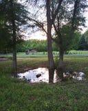 Ландшафт пейзажа природы зелёный зеленый Стоковое Фото
