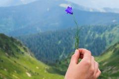Ландшафт, перемещение, туризм Женская рука держит цветок на фоне гор Горизонтальная рамка Стоковые Фотографии RF