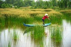 Ландшафт перепада Меконга с въетнамской весельной лодкой на Nang - типом женщины поля дерева спешкы, южного Вьетнама Стоковое Фото